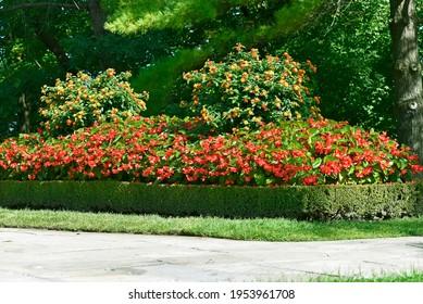 Garden In Bloom, Landscaped Garden