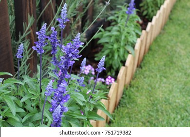 Garden Border with Blue Salvia