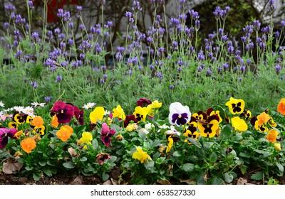 Garden border flowers