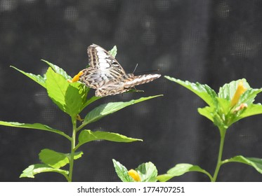 Garden with a butterfly flitting from flower to flower.