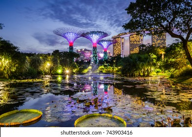 Garden by the Bay, Singapore- May 13, 2017: Beautiful dusk at Garden by the Bay. Calm water at the Lily Pond create reflection for the man made structure, Super Tree and MBS Hotel.
