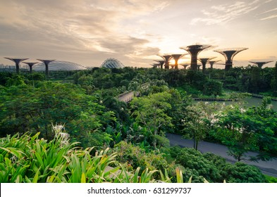 Garden By The Bay, Singapore- Oct 8, 2016: Beautiful sunrise at Garden By The Bay. it is a nature park spanning 101 hectares of reclaimed land in central Singapore, adjacent to the Marina Reservoir.