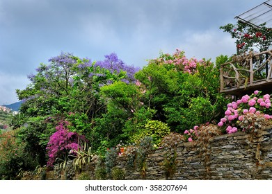 garden with a cascade of colorful spring flowering trees