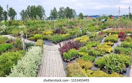 Garden center for the sale of plants. Here you can buy a lot of varieties of green plants: various flowers, fir, spruce, pine, Apple and other fruit trees. Everything to decorate your garden