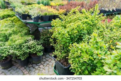 Garden centre, plant nursery