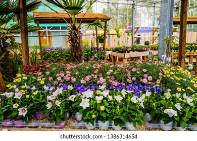 garden centre with plants and flowers uk