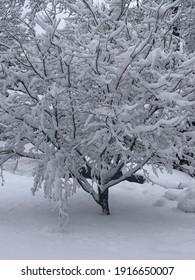 Garden City, New York, USA - February 7, 2021: Snow Covered Tree