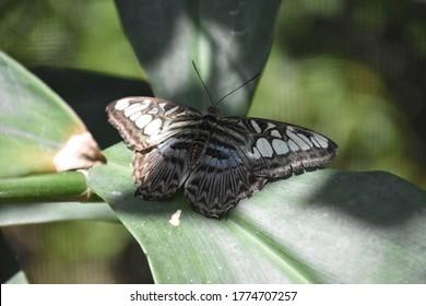 Garden with a clipper butterflies spread wide open.