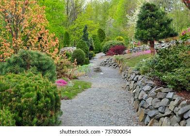 Garden conifers trees walk