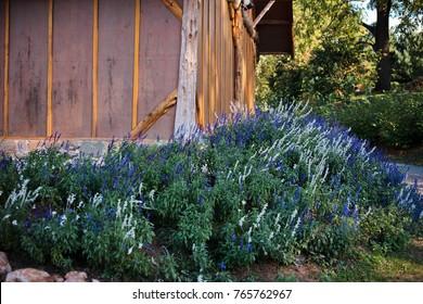 Garden corner with blue flowers