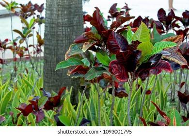 Garden in Cozumel