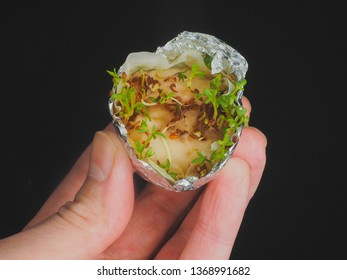 Garden cress in aluminum foil on wet cotten in hand isolated on black