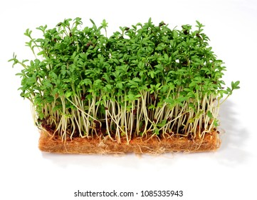 garden cress isolated over white background