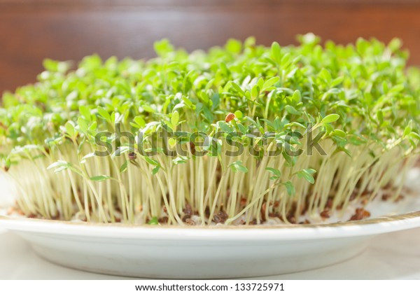 Garden cress (Lepidium sativum) is a fast-growing, edible herb that is botanically related to watercress and mustard, sharing their peppery, tangy flavor and aroma.