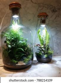 Garden cultivated inside bottle