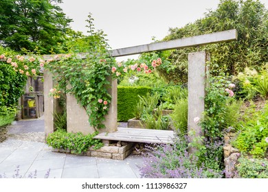 Garden design with a concrete gray wall,pink  roses, salvias and ferns