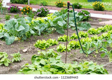 Garden with different vegetables