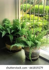 Garden fern terrace