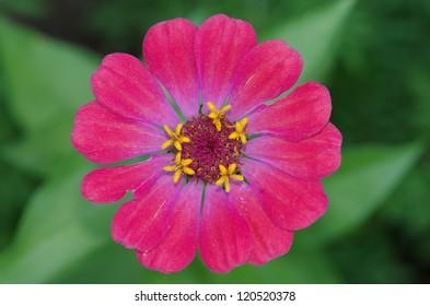 garden flower - Shutterstock ID 120520378
