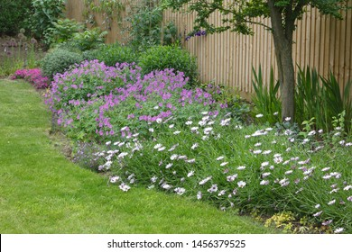 Garden flower bed (flowerbed) with cape daisies and geraniums in a typical English garden