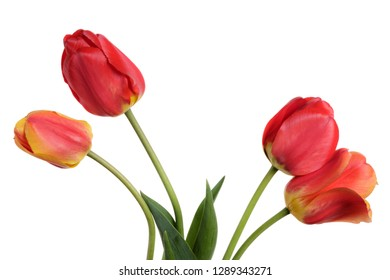 Garden Flower bouquet from tulips. Isolation on a white background