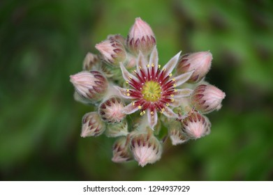 Garden flower several color