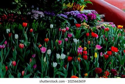 Garden a lot of flowers