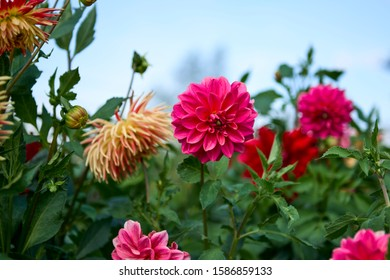 Garden flowers against the sky with blurry background