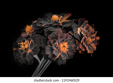 garden flowers, bouquet, petals with orange edges, dark background.