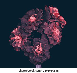 garden flowers, bouquet, petals with pink edges, dark background.