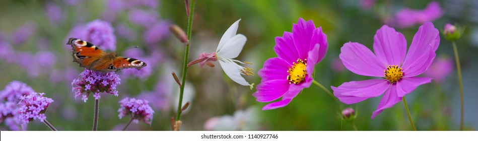 garden flowers and butterfly close up - macro