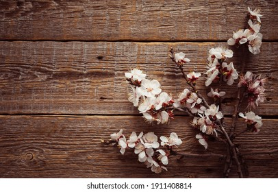 Garden flowers over dark wooden table background. Backdrop with copy space. Frame of apple branch on rustic wooden background. Spring flowers. Spring background. Top view.
