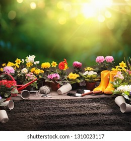 Garden Flowers, Plants and Tools on a Sunny Background. Spring Gardening Works Concept