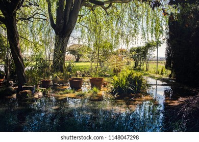 Garden with flowers and plants waterlogged