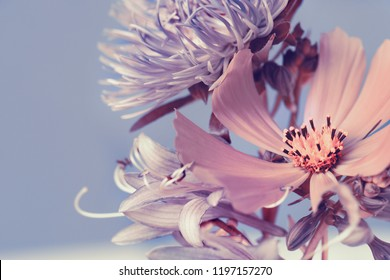garden flowers, purple bouquet, blue background. Studio photography.