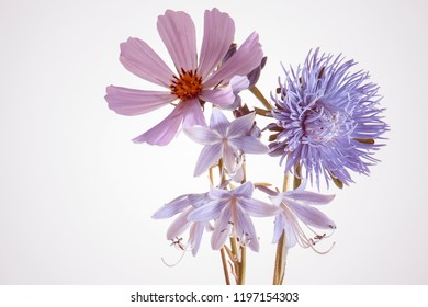 garden flowers, purple bouquet, white background, isolated.