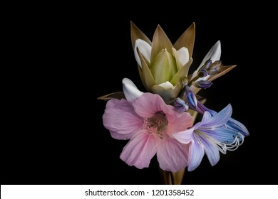 garden flowers, small bouquet on a black background, isolated. Studio photography.