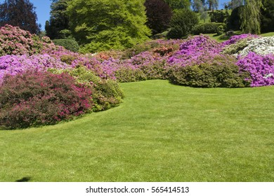 Garden with flowers, in spring