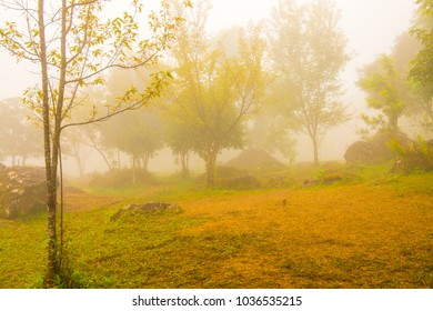 Garden with fog on mountain, Thailand.