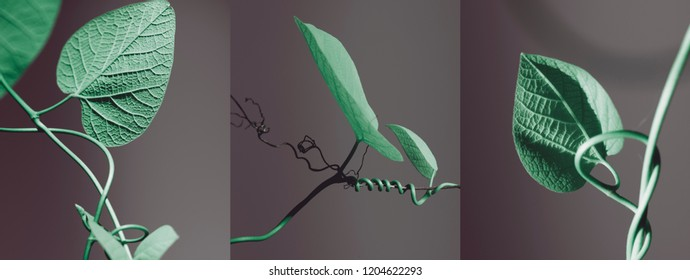 garden foliage on a gray background, growing stems abstract, tribtych.