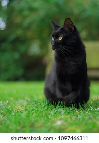 In a garden in France, a beautiful black cat is looking on the left.