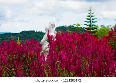 Garden of Fresh and Blooming Red Cockscomb Flowers With A White Stone Statue of A Beautiful Women