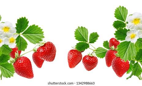 garden fresh sweet strawberry