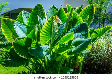 Full Sun Plant Images Stock Photos Vectors Shutterstock