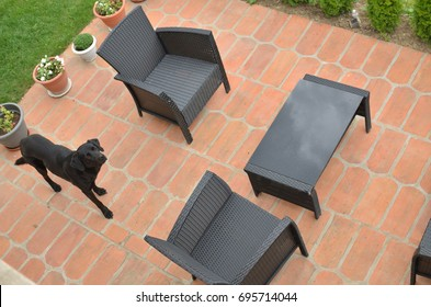 Garden furniture and a dog in a backyard - bird's eye view