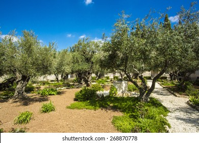 Garden of Gethsemane, Jerusalem, Israel. The gnarled olive trees they see could have been young saplings when Jesus came here with the disciples on that fateful night after the Last Supper