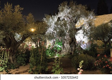 The Garden of Gethsemane - The Garden of Olives