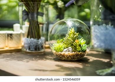 Garden in a glass bottle