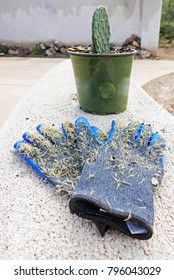 Garden gloves full of cactus spines in front of a small potted cactus