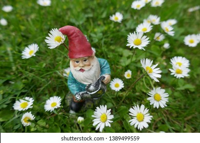 Garden gnome with red hat and a watering can in hand on a green meadow between daisies   (This sculpture has no recognizable mark, logos, no reference to the manufacturer and is not copyrighted)